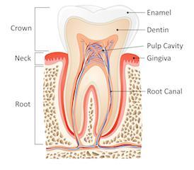 root canal melbourne cbd